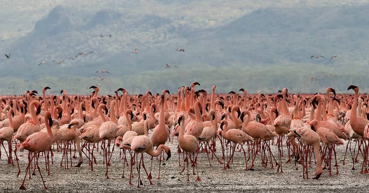 Flamingos on the Rift Valley Lakes in Kenya - Best Time