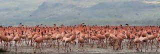 Flamingos on the Rift Valley Lakes