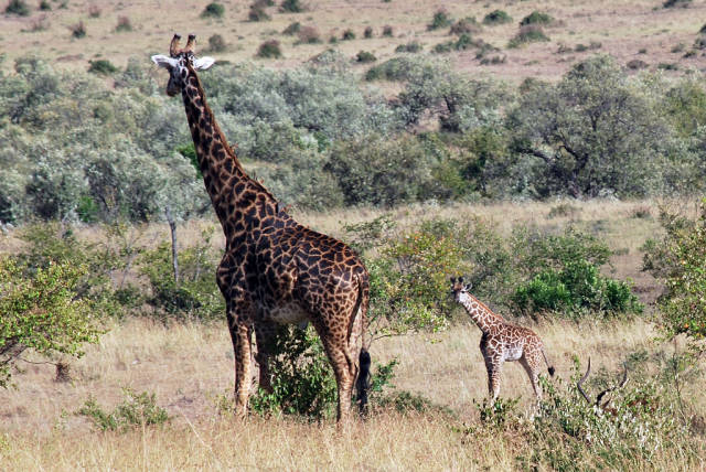 Best time for Newborn Animals in Kenya