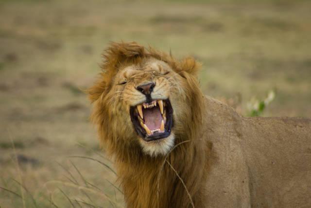 Best time to see Safari Adventure in Kenya