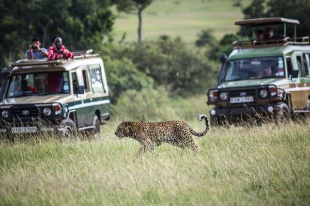 Safari Adventure in Kenya - Best Time