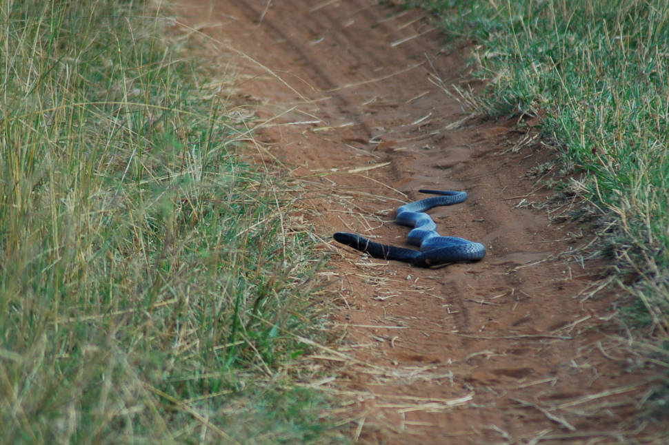Snake Safari in Kenya - Best Season