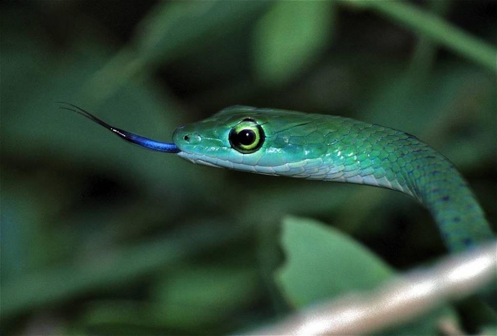 Snake Safari in Kenya - Best Time