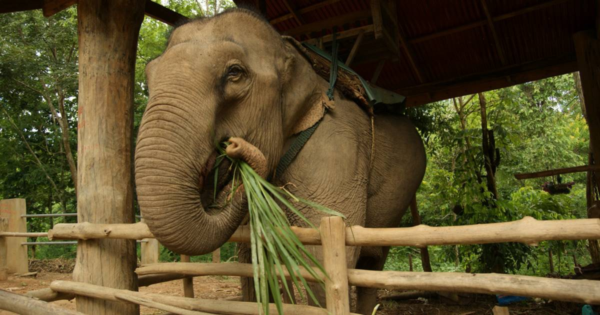 Caring for an Elephant in Laos - Best Time