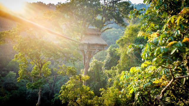 The canopy hut