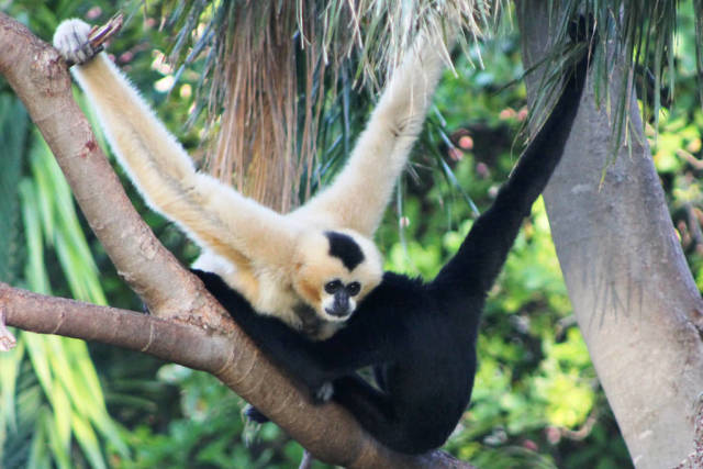 Gibbon Experience in Laos - Best Time
