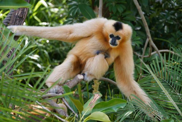 Gibbon Experience in Laos - Best Season