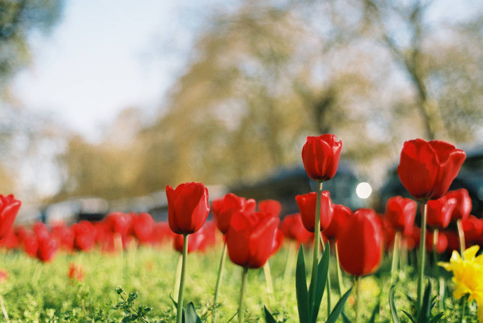 Spring in London - Best Time