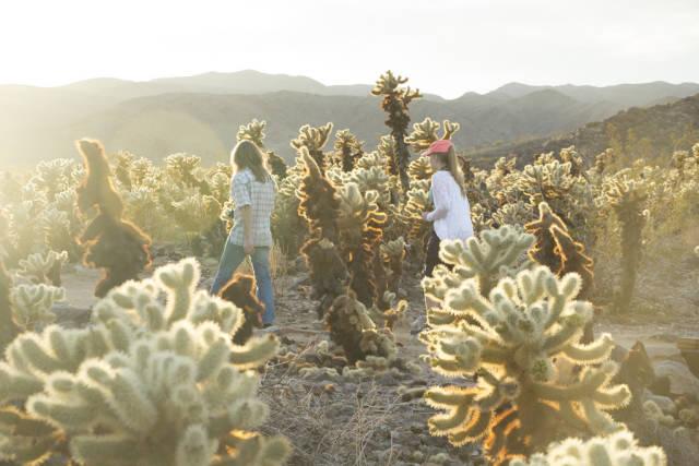 Cactus Blooming in Los Angeles - Best Time