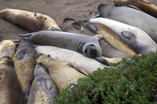 Best time for Elephant Seal Watching in Los Angeles