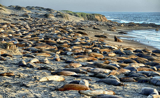 Elephant Seal Watching in Los Angeles - Best Time