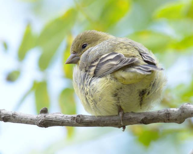 Birdwatching in Ernest E. Debs Park in Los Angeles - Best Season