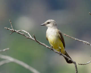 Birdwatching in Ernest E. Debs Park