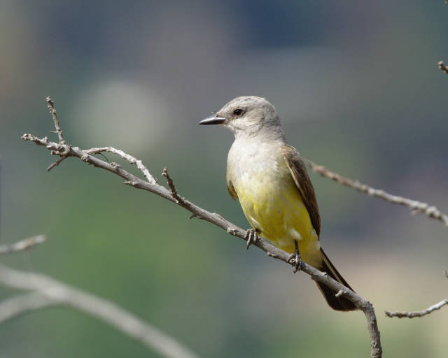 Birdwatching in Ernest E. Debs Park in Los Angeles - Best Time