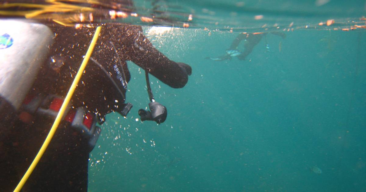 Diving around Santa Catalina Island  in Los Angeles - Best Time