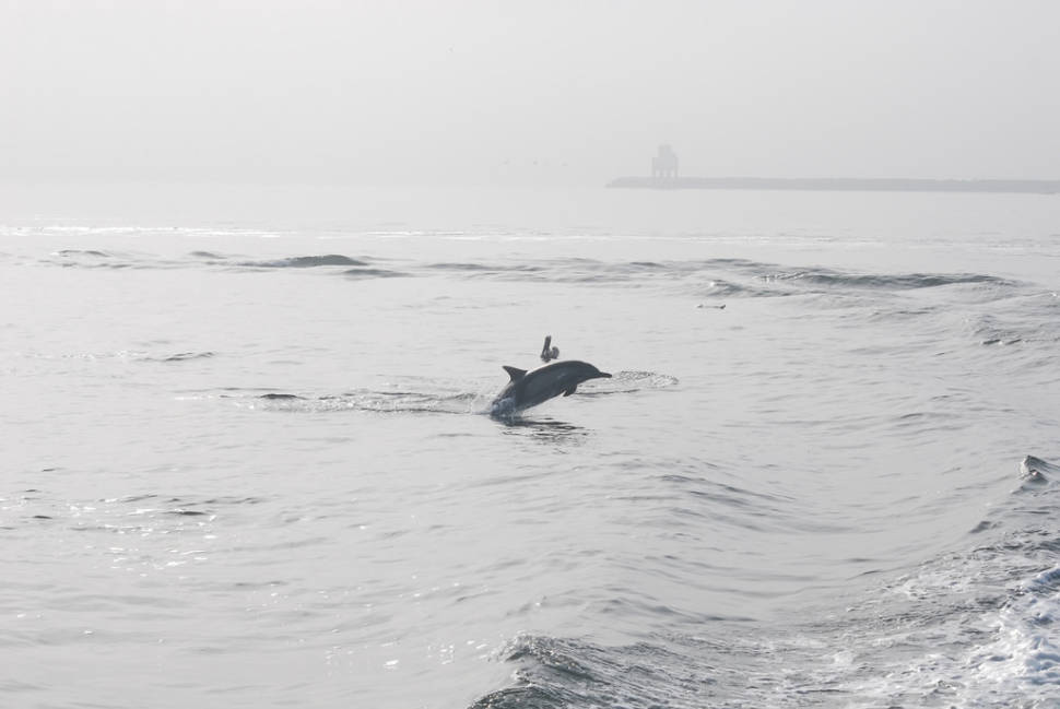 Whale and Dolphin Watching  in Los Angeles - Best Season