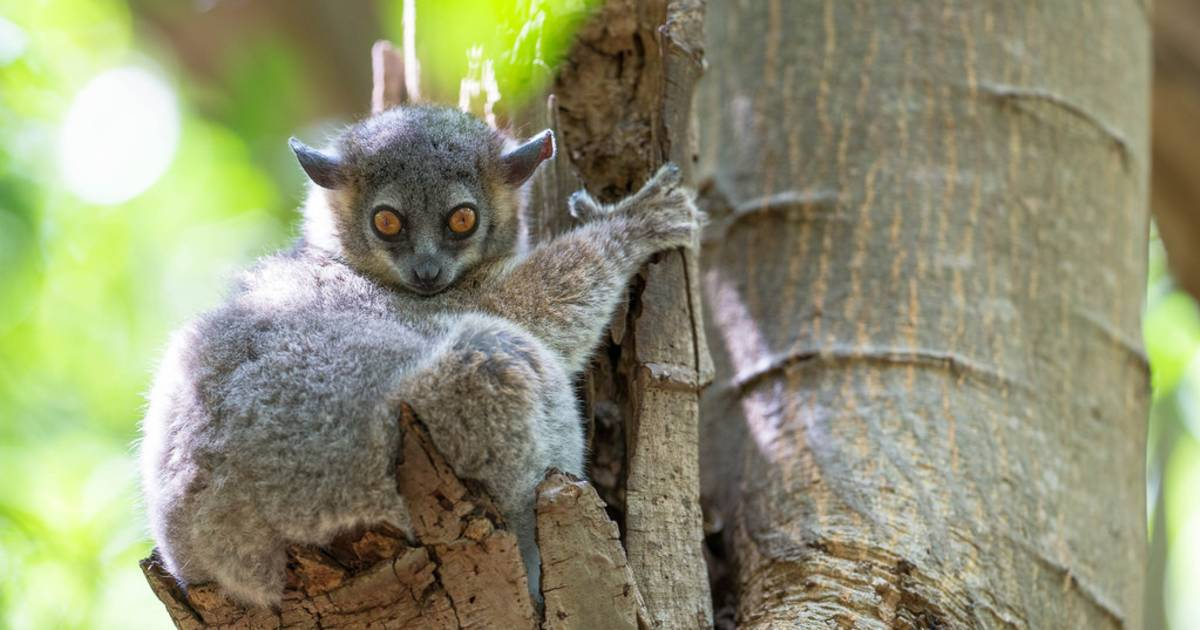 Baby Lemurs in Madagascar - Best Time