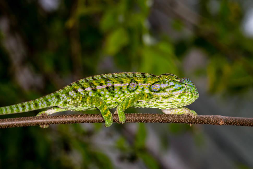 Best time for Chameleons in Madagascar