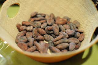Cocoa Harvest Season