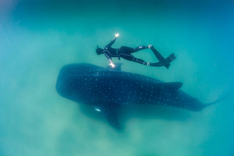 Diving in Madagascar - Best Time