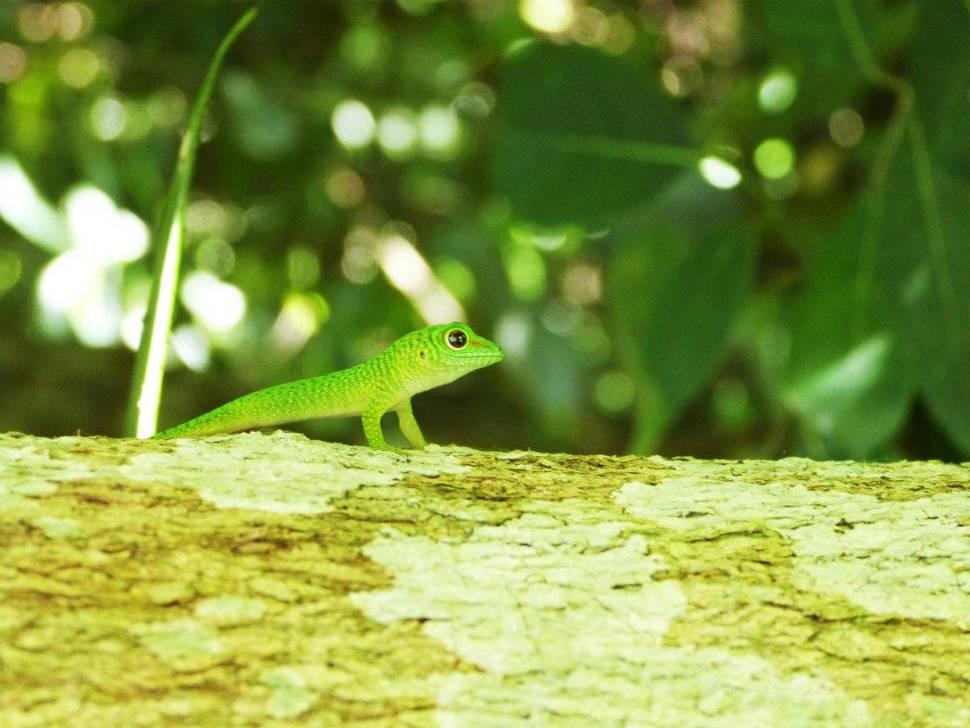 Dry Season in Madagascar - Best Season