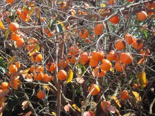 Exotic Fruits Season