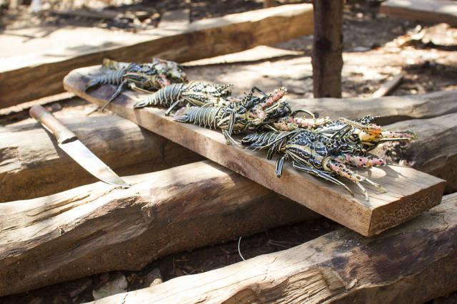 Lobster Season in Madagascar - Best Season