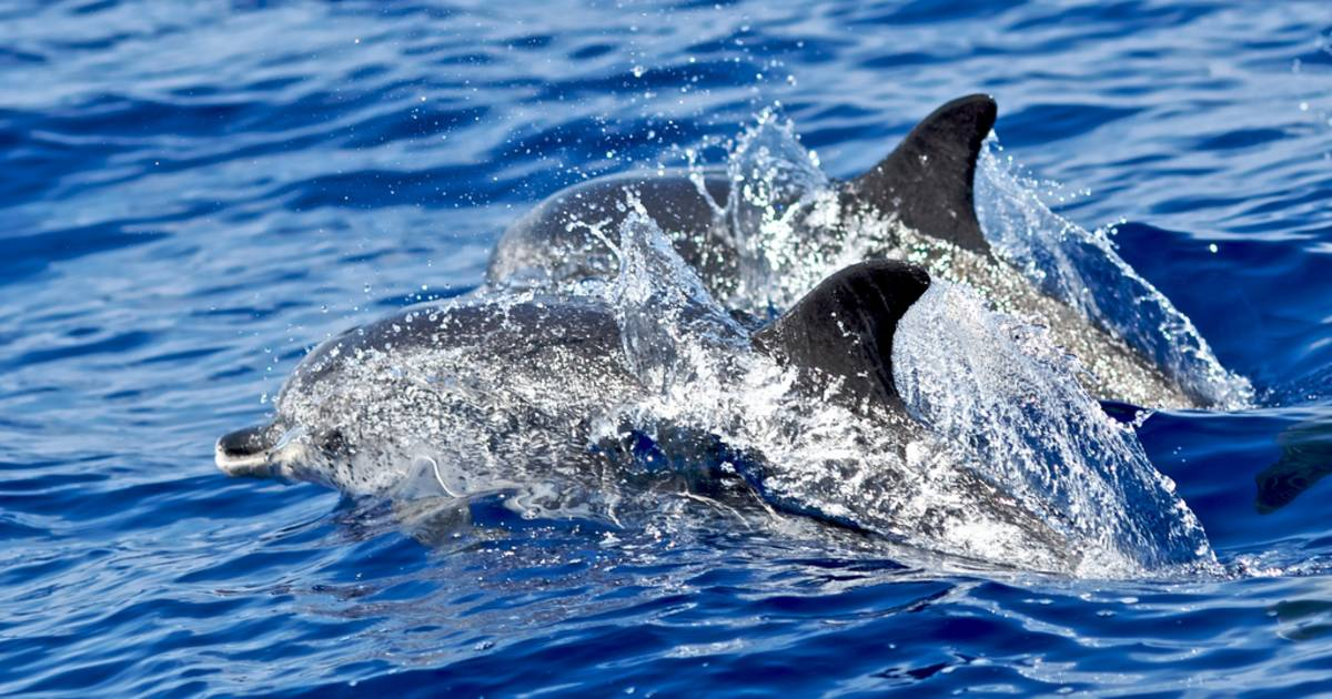 Whale and Dolphin Watching in Madeira - Best Time