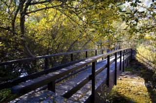 Cotos Forest Trail, Rascafría