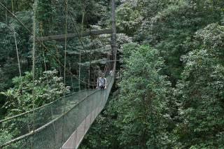 Canopy Walks in Borneo