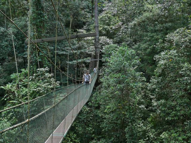 Canopy Walks in Borneo in Malaysia - Best Time