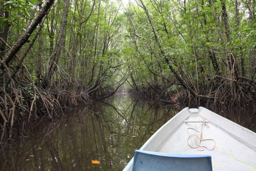 Boating around mangrove in Kampung Cherating, Pahang, Malaysia