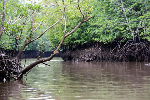 Mangroves of Langkawi