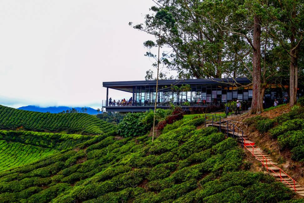 BOH tea plantation viewing Deck, Cameron Highlands