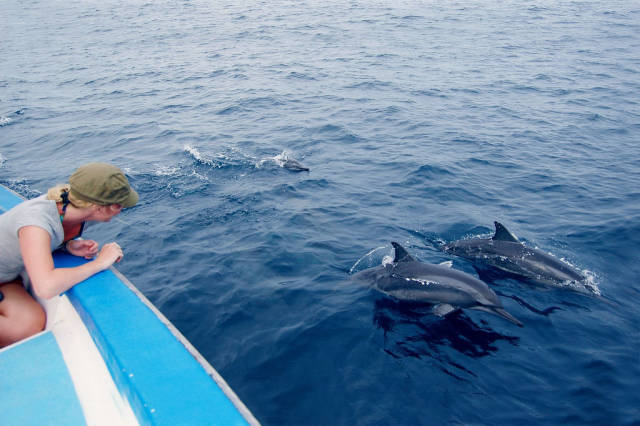 Dolphin Watching in Maldives - Best Time