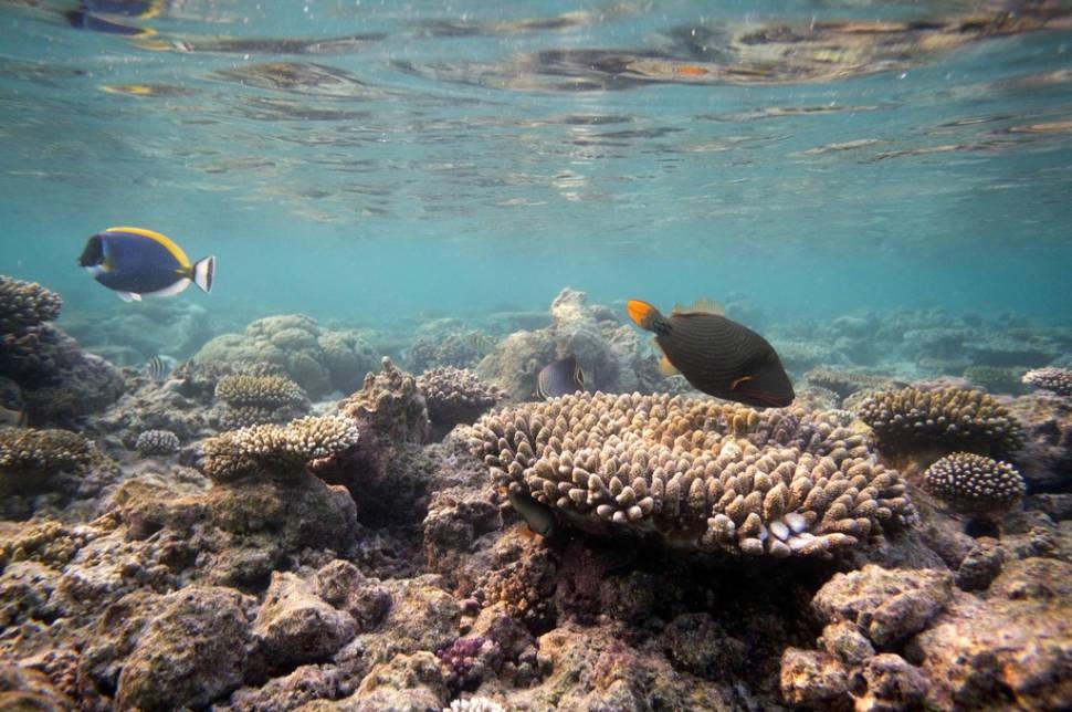 Scuba Diving & Snorkeling in Maldives - Best Season