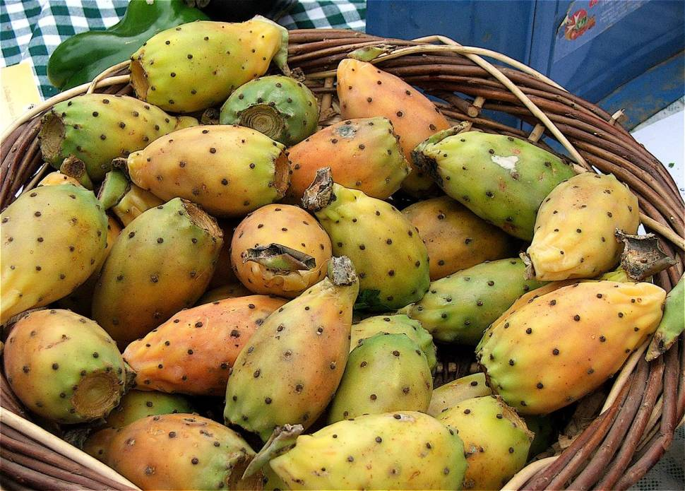 Prickly Pear in Malta - Best Season