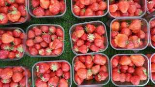 Strawberry Season and Festa