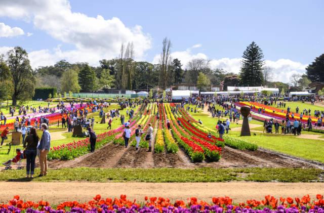 Best time for Tesselaar Tulip Festival in Melbourne
