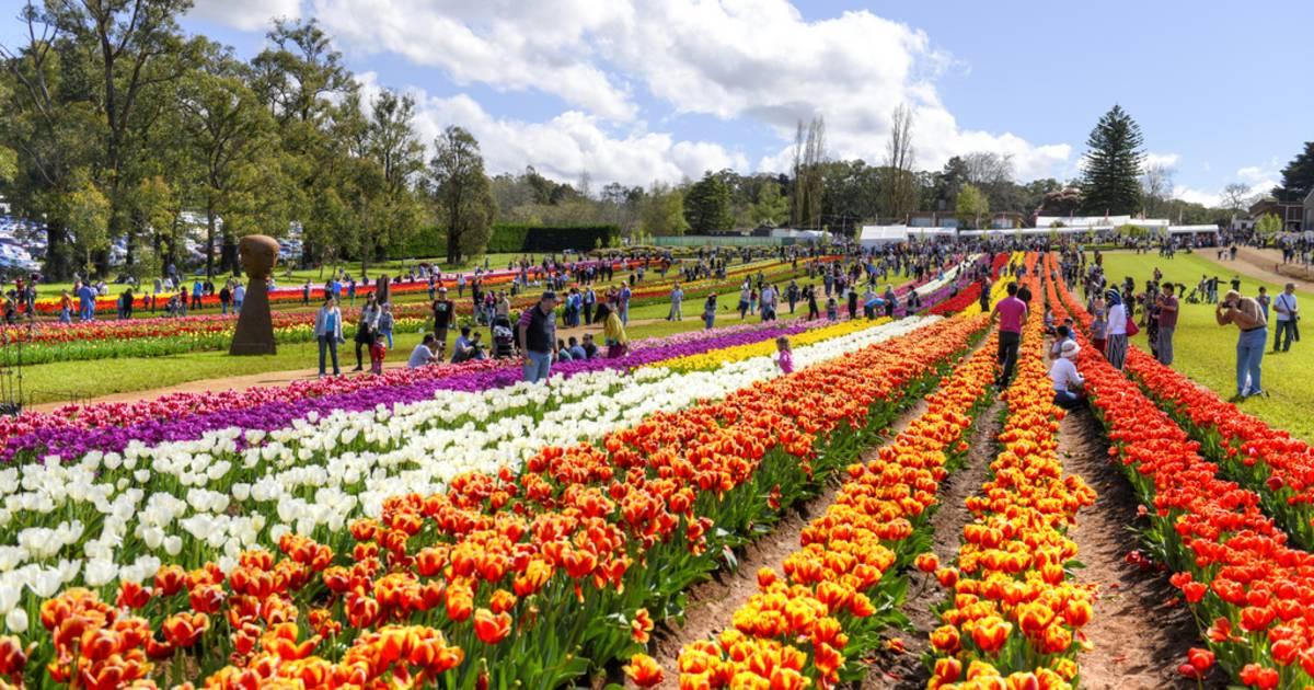 Tesselaar Tulip Festival 2019 In Melbourne Dates Amp Map
