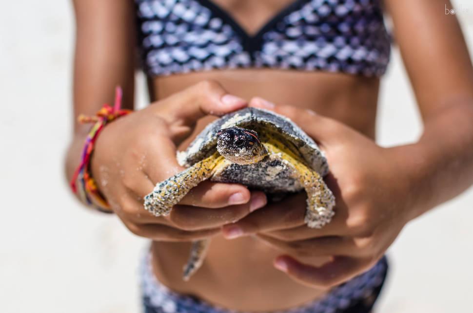 Baby Turtle Release in Mexico - Best Season