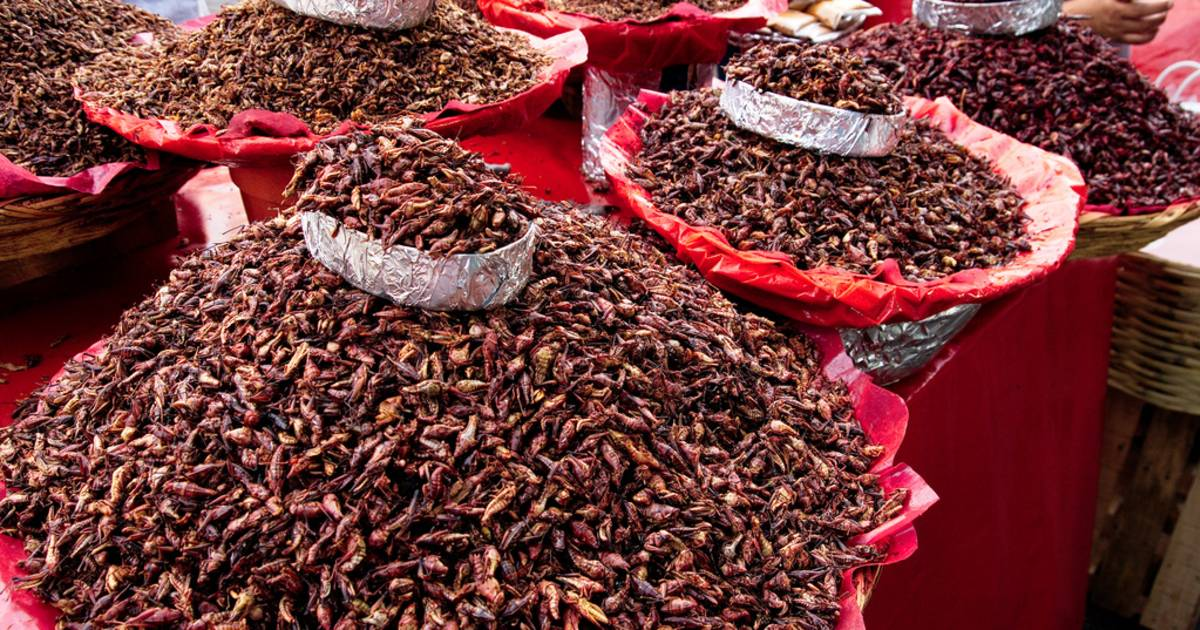 Chapulines or Grasshoppers in Mexico - Best Time