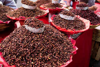 Chapulines or Grasshoppers