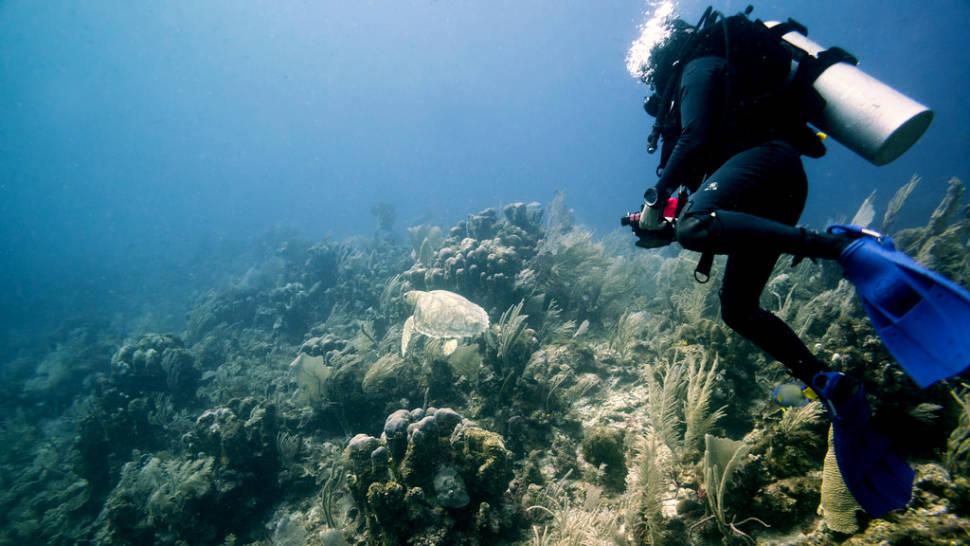 Reef Diving Xpu Ha Yucatan Peninsula Mexico