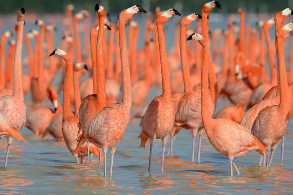 Best time for Flamingos in Mexico