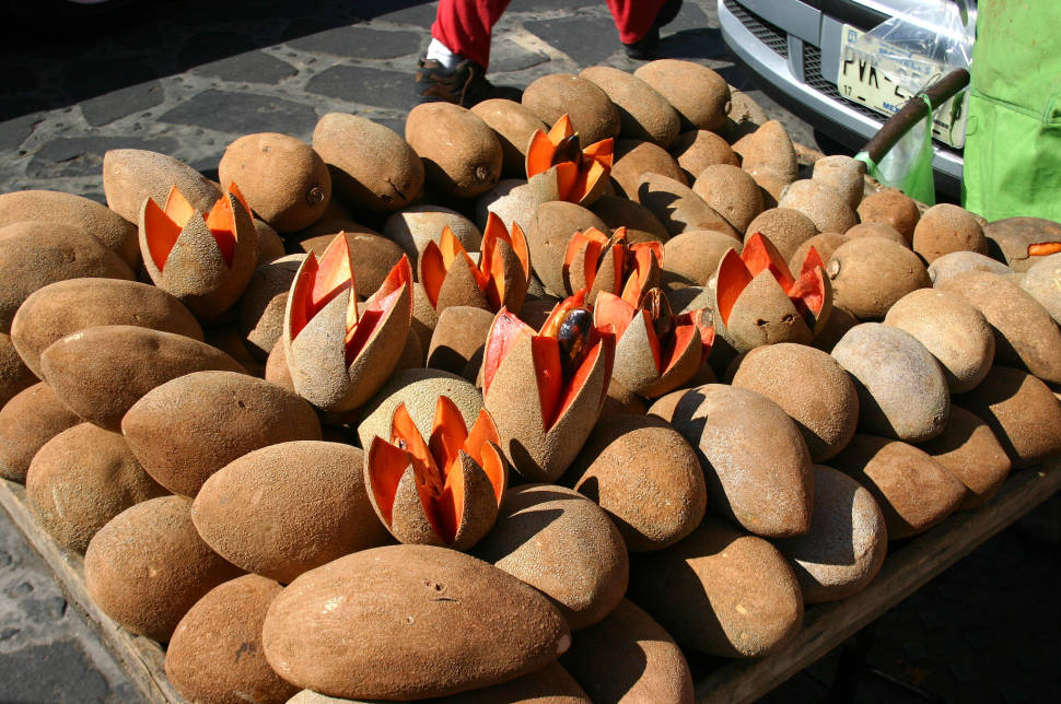 Mamey Sapote & Tejate in Mexico - Best Time