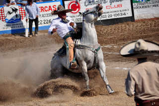 Mexican Rodeos or Charreadas