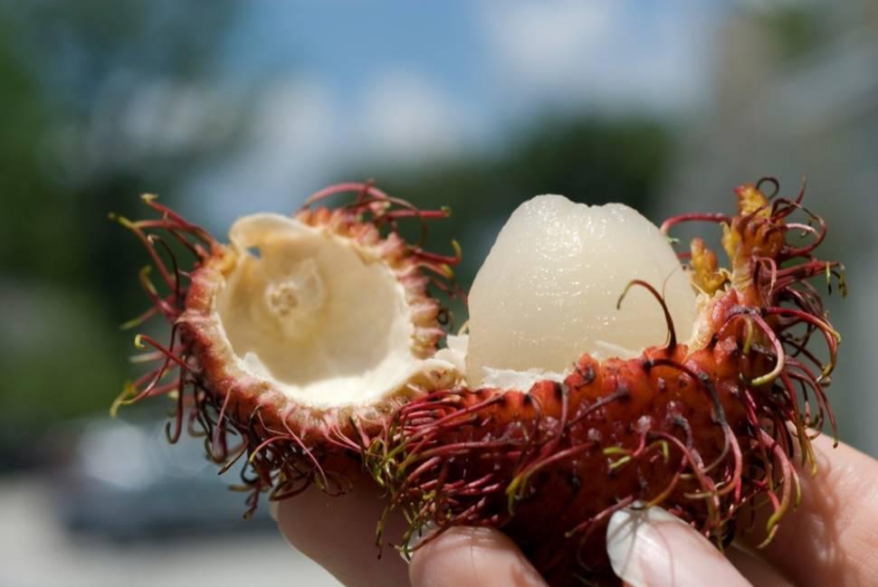 Rambutans in Mexico - Best Season
