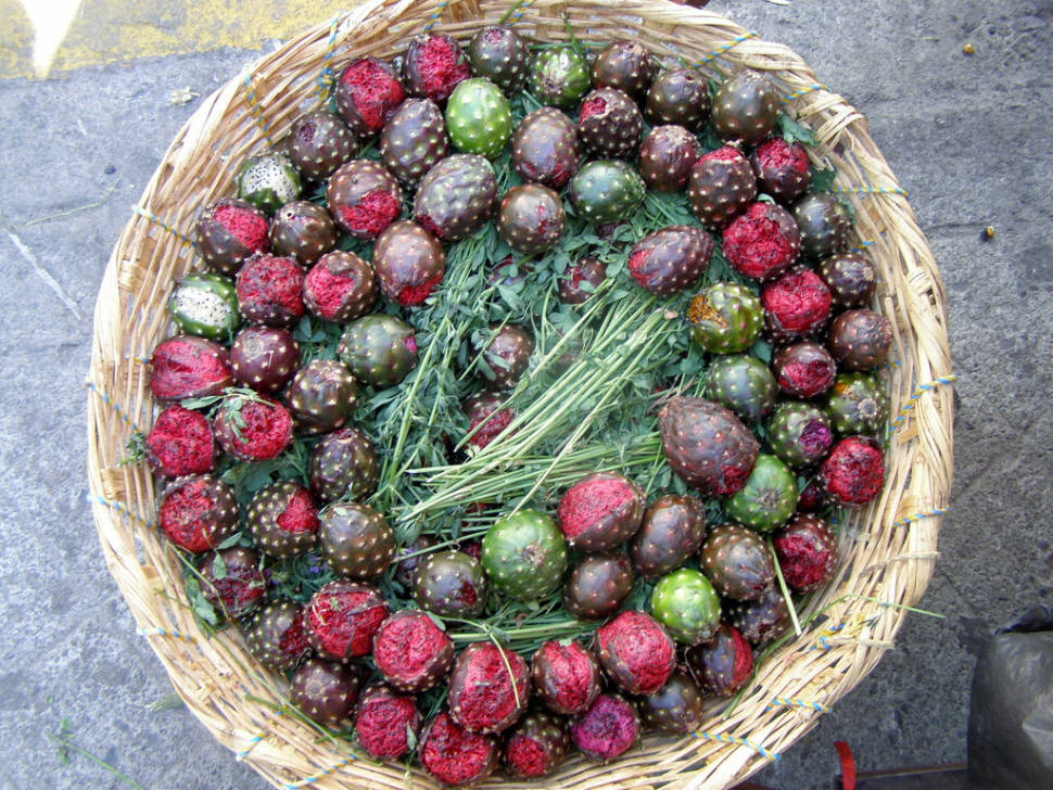 Best time to see Tuna (Prickly Pear) in Mexico
