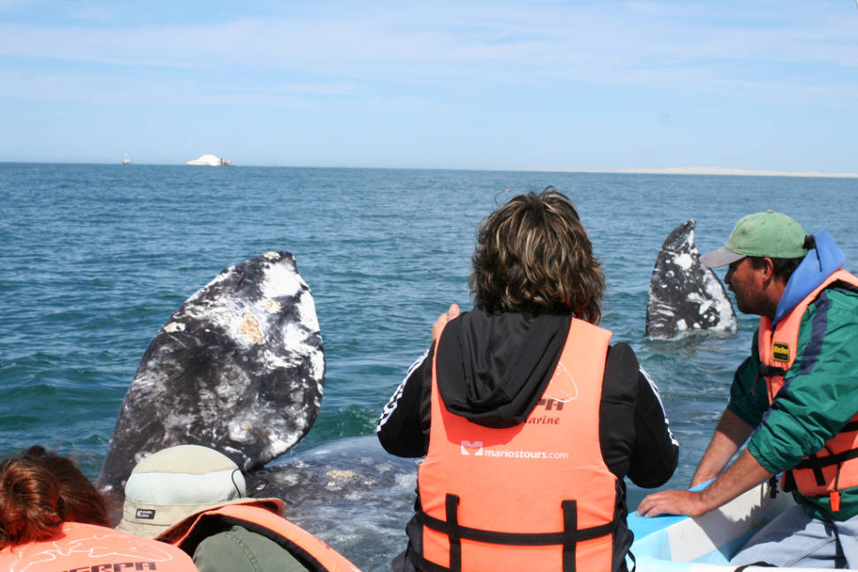 Whale Watching in Mexico - Best Season